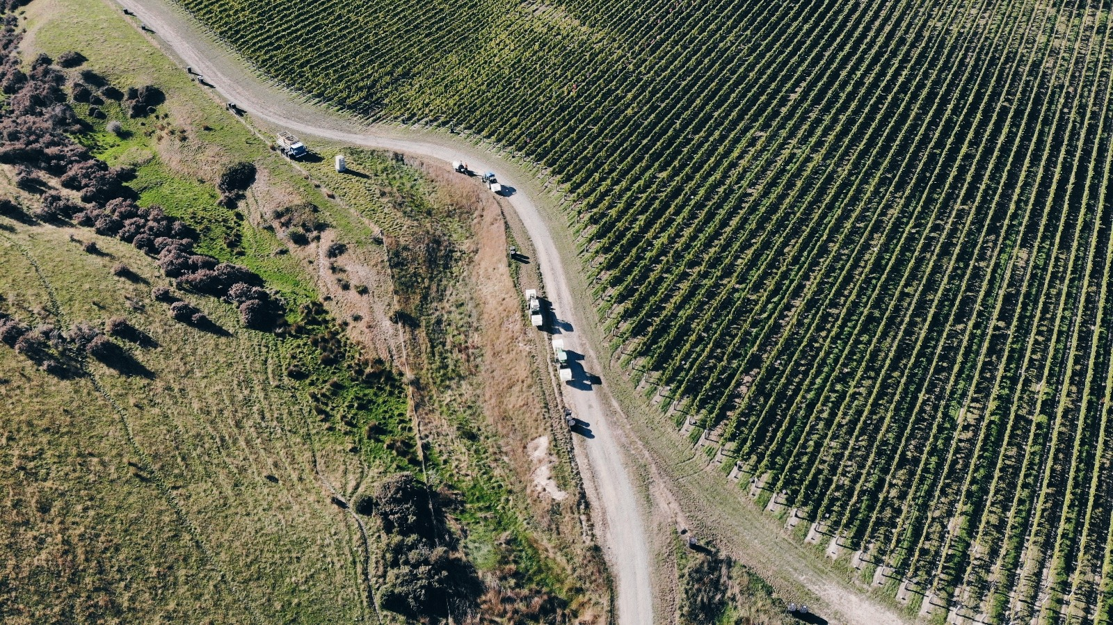 Drone shot New Zealand vineyard