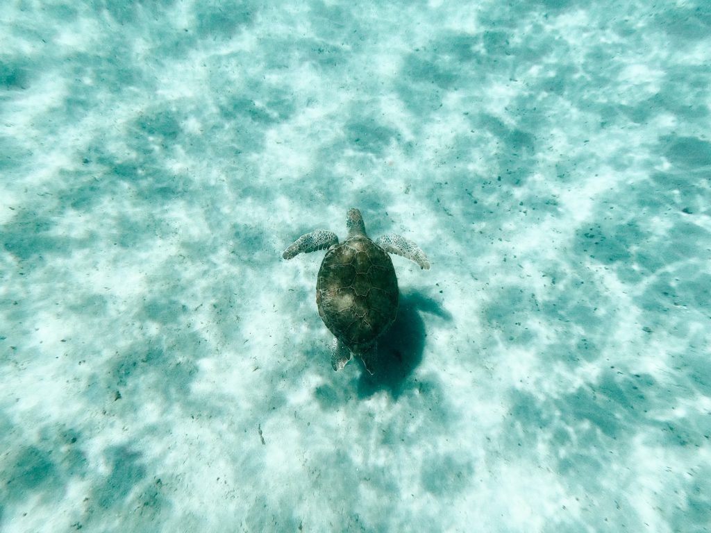 Turtles Curacao