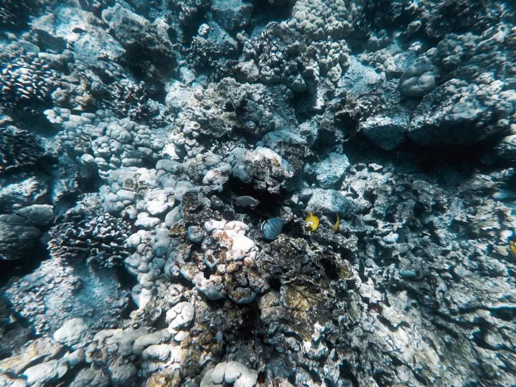 Best places for snorkelling in Hawaii