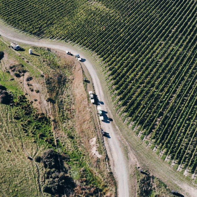 Drone shot New Zealand vineyard